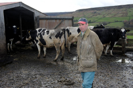 Andrew Potter with cows_275_182